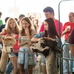 Harvest Festival at Bethel Woods with featured partner the Rosehaven Alpaca Festival