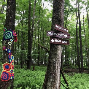 Bindy Bazaar Trails signs on trees in woods