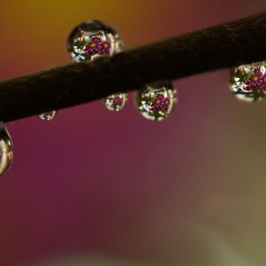 zoomed photo of water droplets