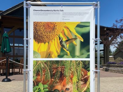 outdoor exhibition photos