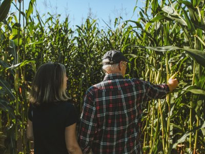 people in the corn maze at bethel woods