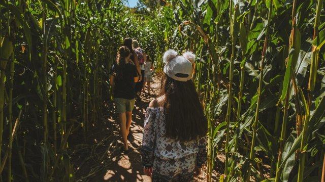 2021 Bethel NC Harvest Festival